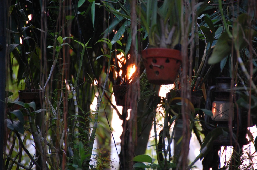 Sunrise through the greenery at Betel Garden Homestay, Hoi An